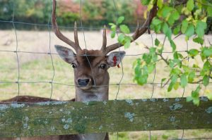 Deer Fences in Stamford, CT, Greenwich, CT, & Westchester, NY